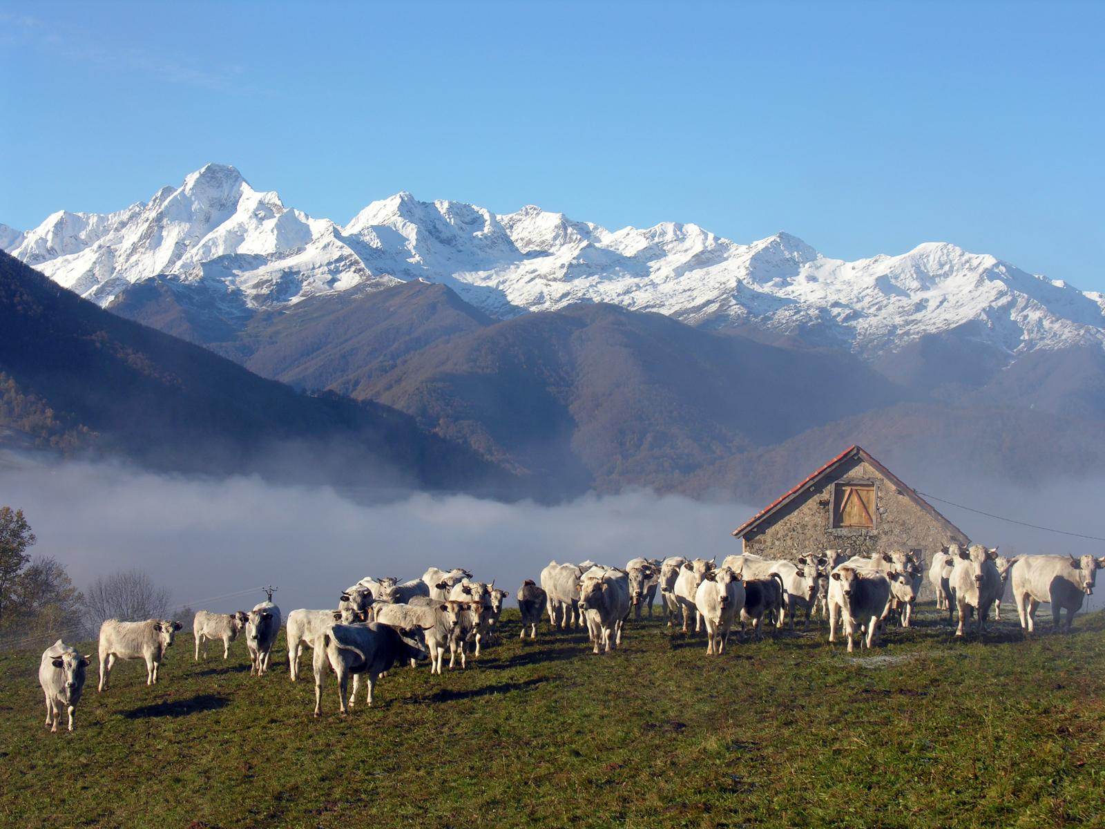 Tourisme rural Midi Pyrénées Gites en Midi Pyrénées